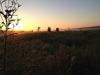 Sunrise over the Springbrook Prairie Forest Preserve