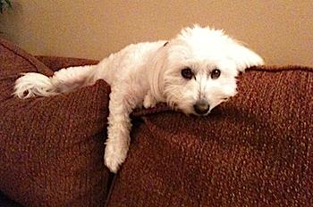Milo on his perch.